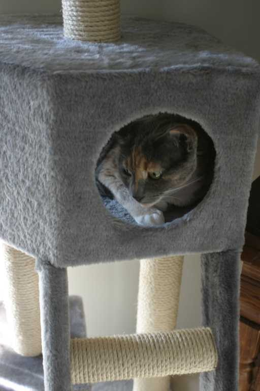 cattower7
