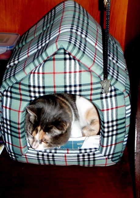 Kitties in huts