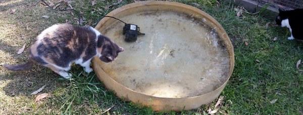 kittybeesa_600x229