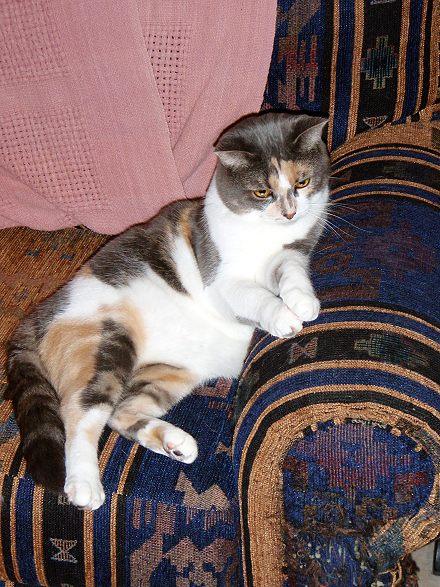 Kitty the job supervisor in supervise mode