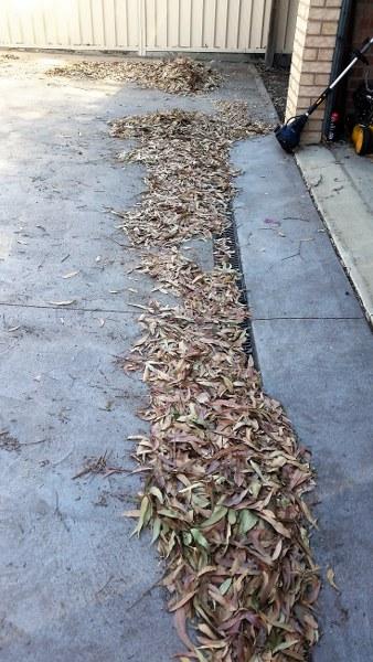leafy_338x600
