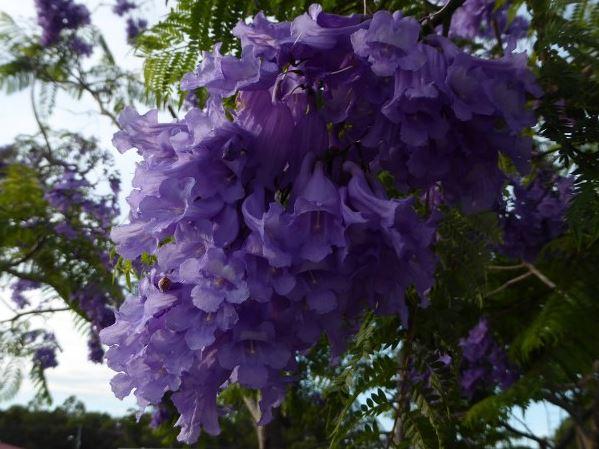 purplesnowtrees