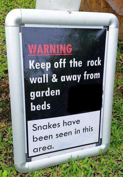 snakes1a